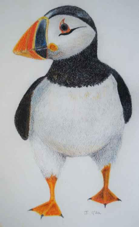 Farne Island Puffin -