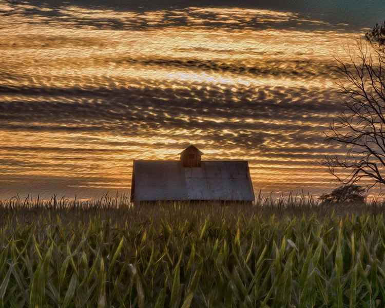 Corn Field and Crib at Sunset -