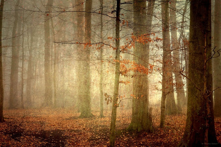 The last Leaves of Autumn - Canvas 75 x 50 cm - Image 0