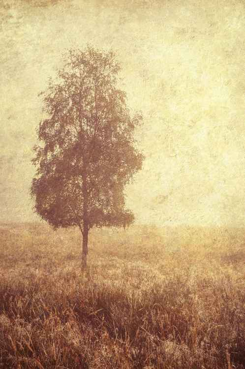 Lonely Tree (Ltd Edition of only 25 Fine Art Giclee Prints from an original photograph)