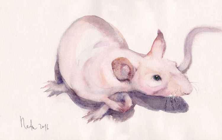 Rat Algernon