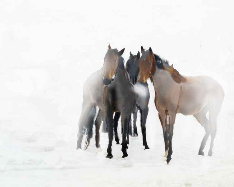 Horses in Snow *CAN BE CUSTOM SIZED FOR YOU.  CONTACT ARTIST* -