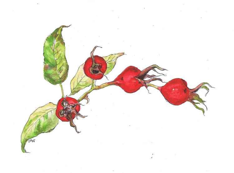 Rosehips -