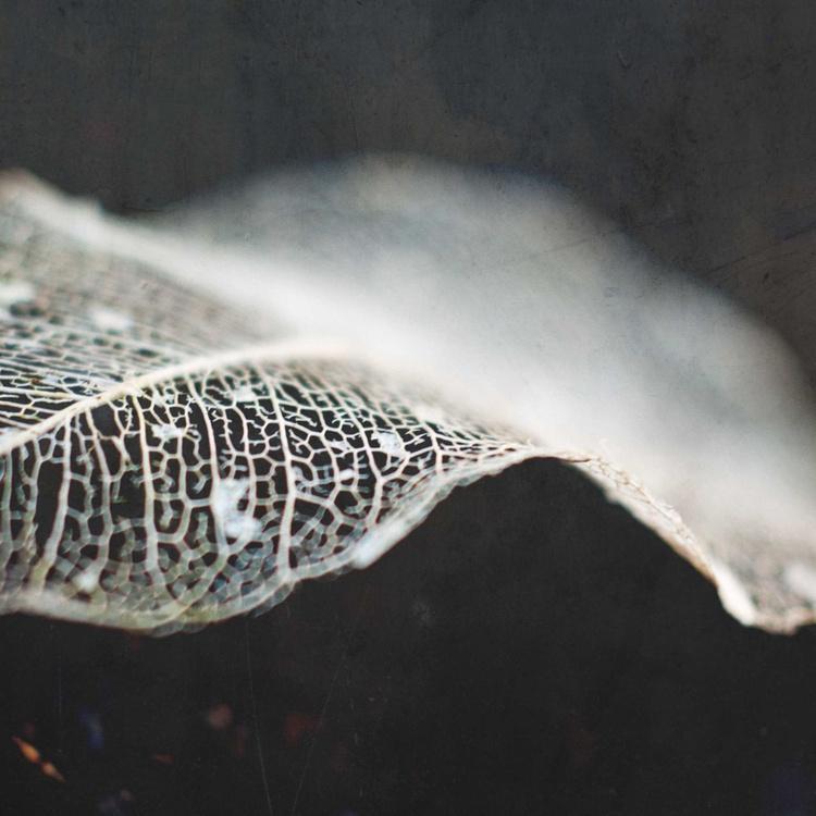 skeleton leaf abstract II - Image 0