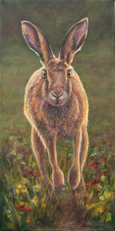 Meadow Hare - Image 0