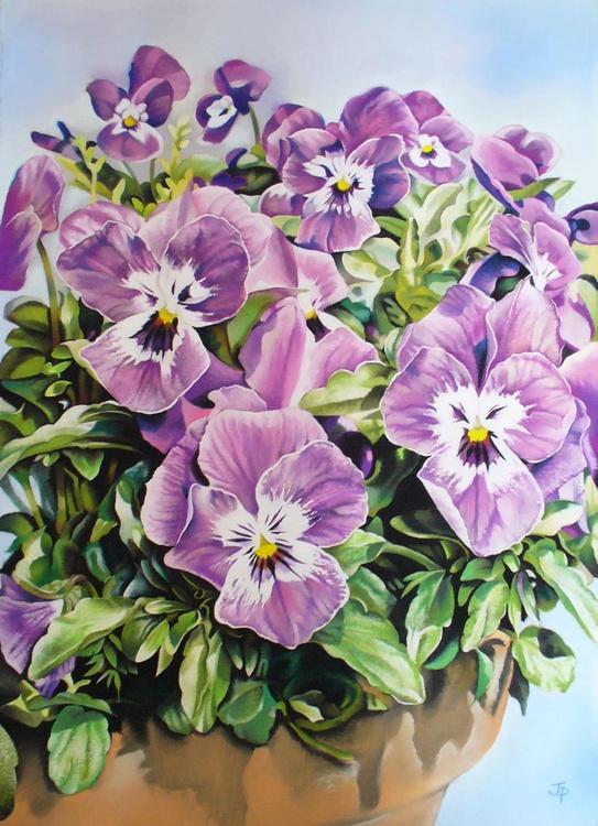 Violas in June - Image 0