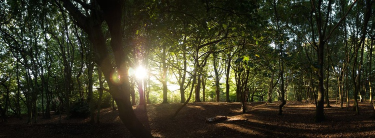 Hampstead Heath. (153x61cm) - Image 0