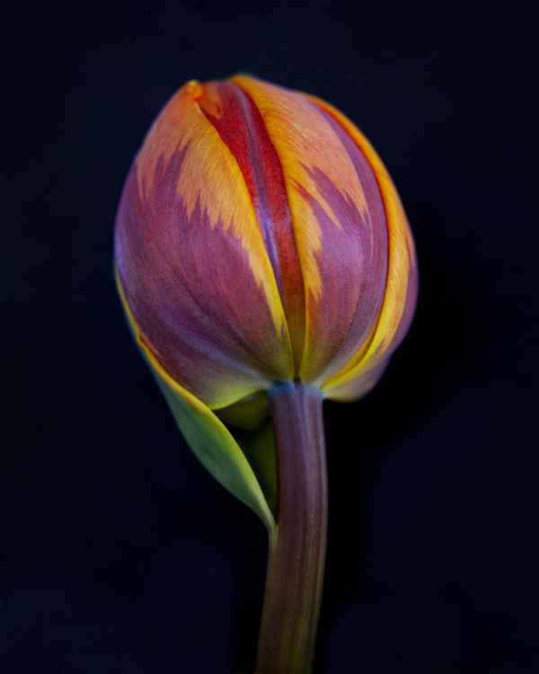 Botanical 13 -