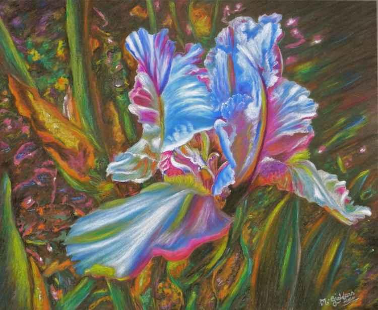Divine Iris -