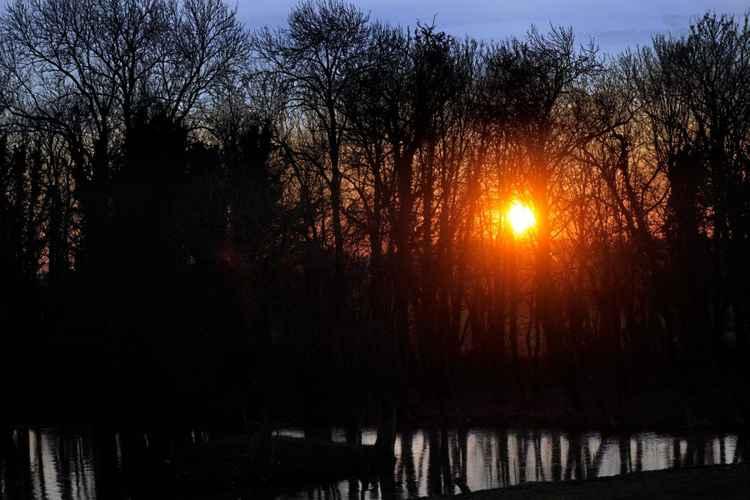 Sunrise Through Trees near Saint-Omer in France -