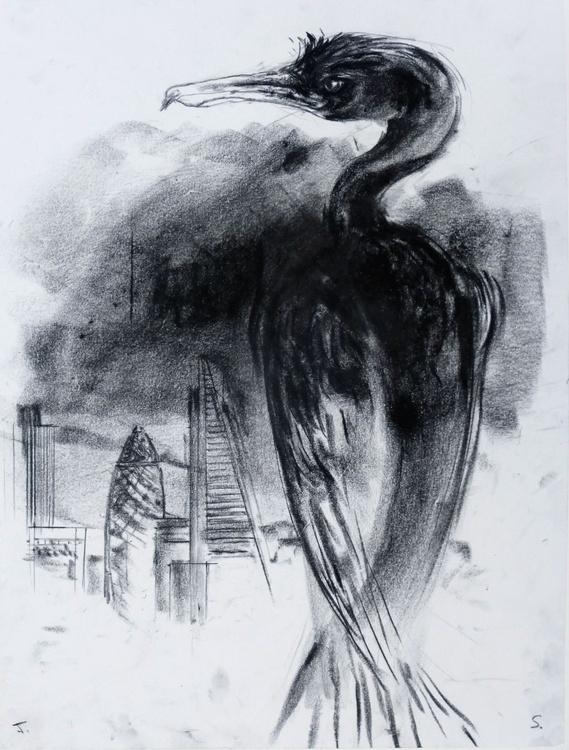 The City and The Cormorant - Image 0