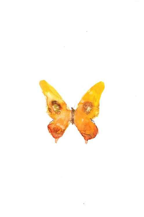 Butterfly 1015O3 -