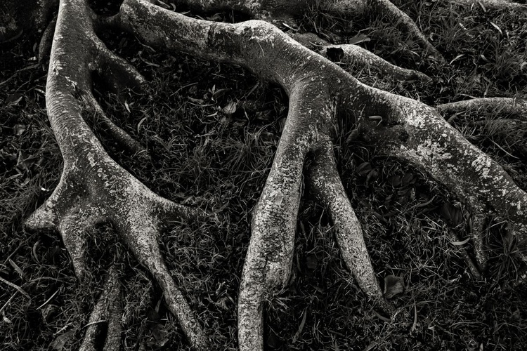 """""""Roots"""" - Image 0"""