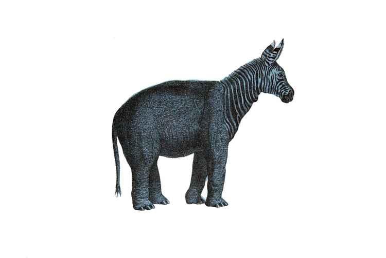 Zebraphant -