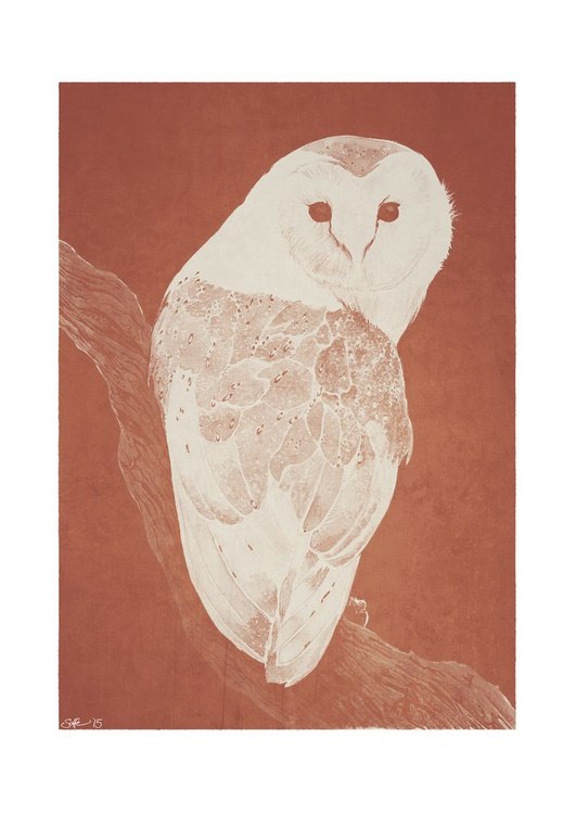 Barn Owl (Tyto alba) - Image 0