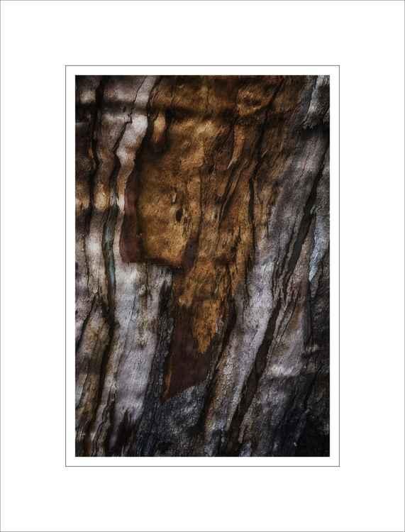 Bark Study 34 -
