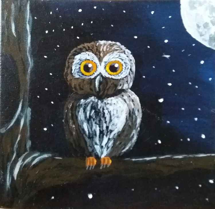littel owl -