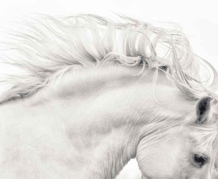 White Stallion -