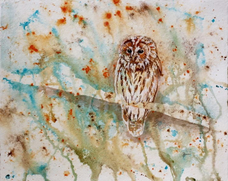 Tawny Owl on Abstract - Image 0