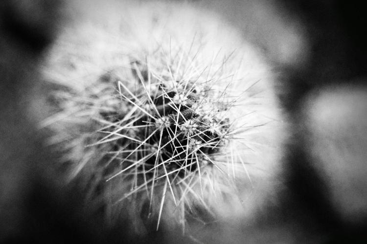 Cactus #2 - Image 0