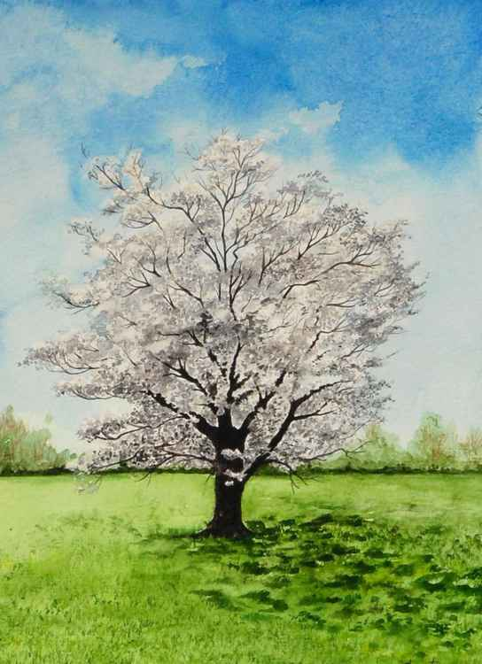 White Flowering Dogwood Tree Painting -