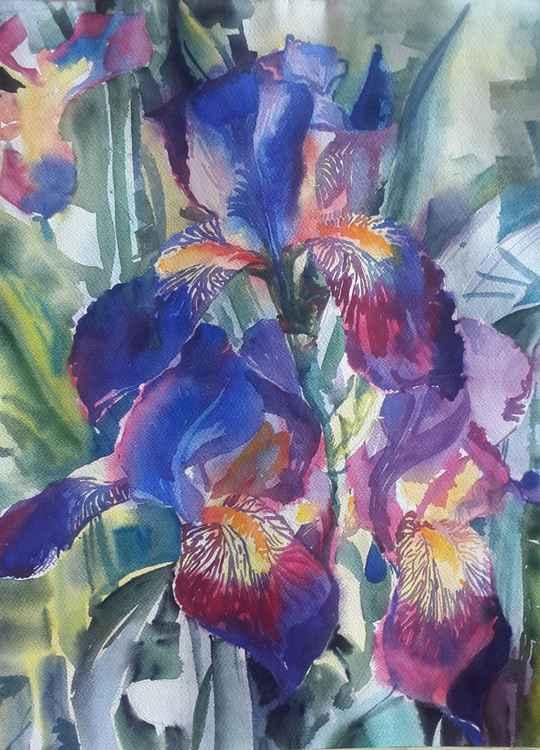 Irises. -