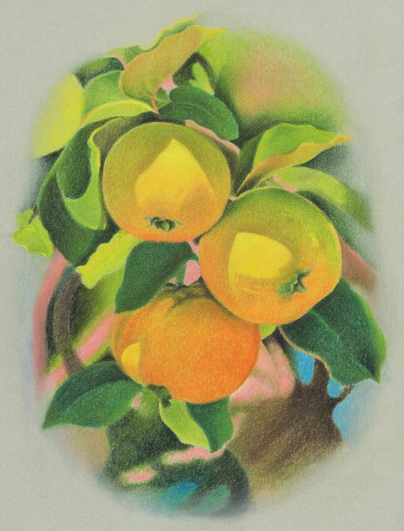 PLAY OF LIGHT ( Quince) - Image 0