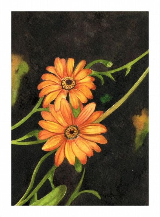 Orange African Daisy - Image 0