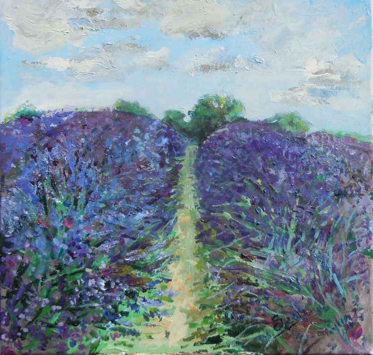 Lavender field1 -