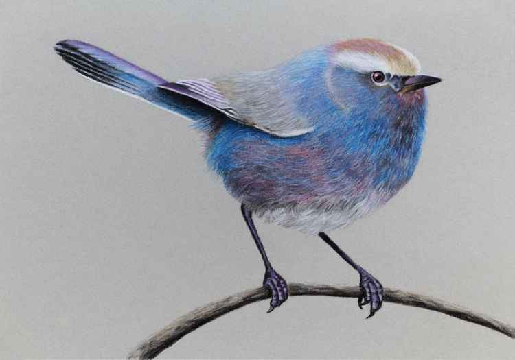 "Original pastel drawing ""White-browed Tit-warbler"" -"