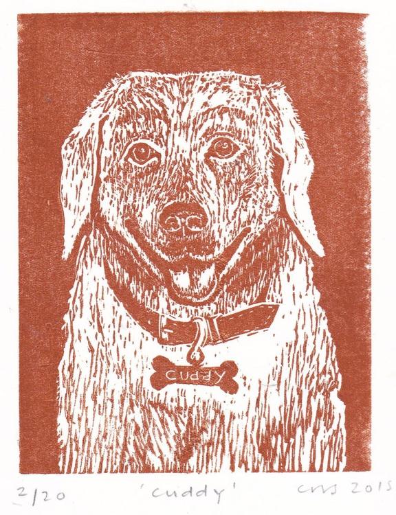 Cuddy the Labrador - Image 0