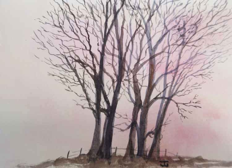 Trees - early morning at Worrall -