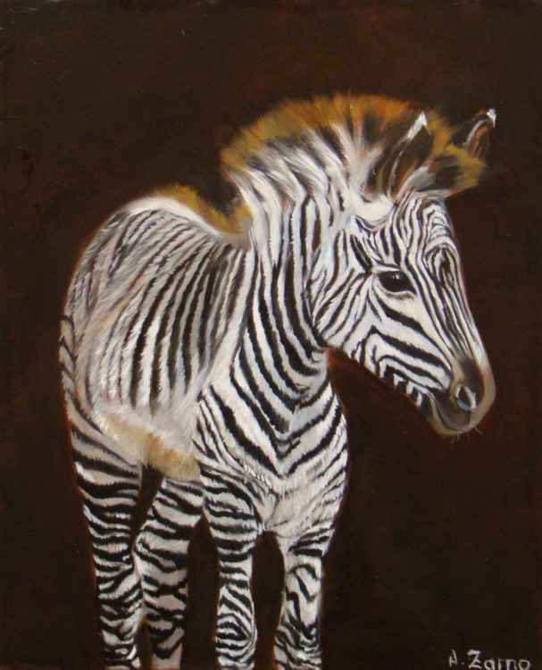 Baby zebra -