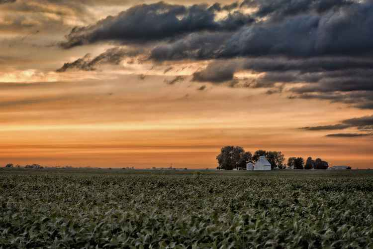 Farm Field under a Sunset Sky -