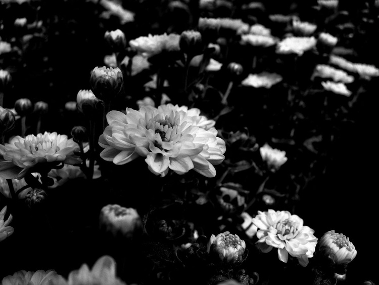 We are normal flowers - Image 0