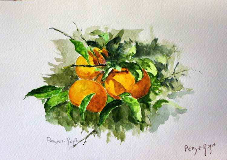 Tangerines on branch -