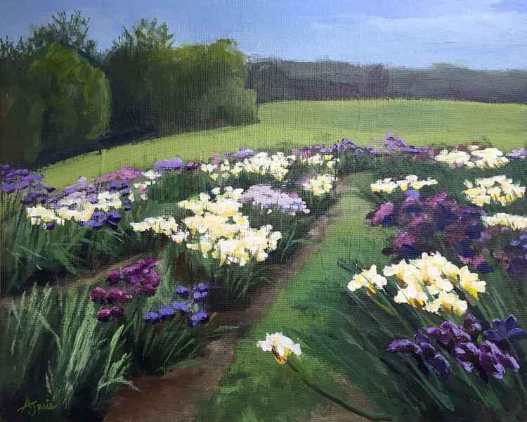 Iris Farm -
