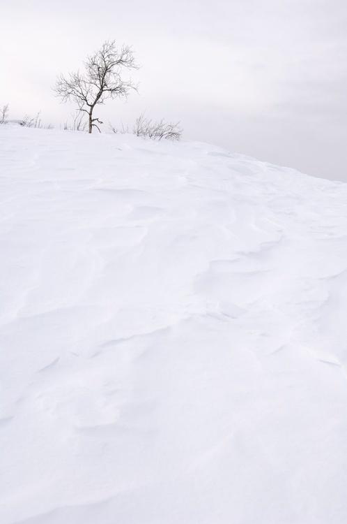 Solitude. (42x59cm) - Image 0