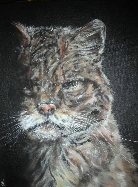 Sour Puss - Image 0