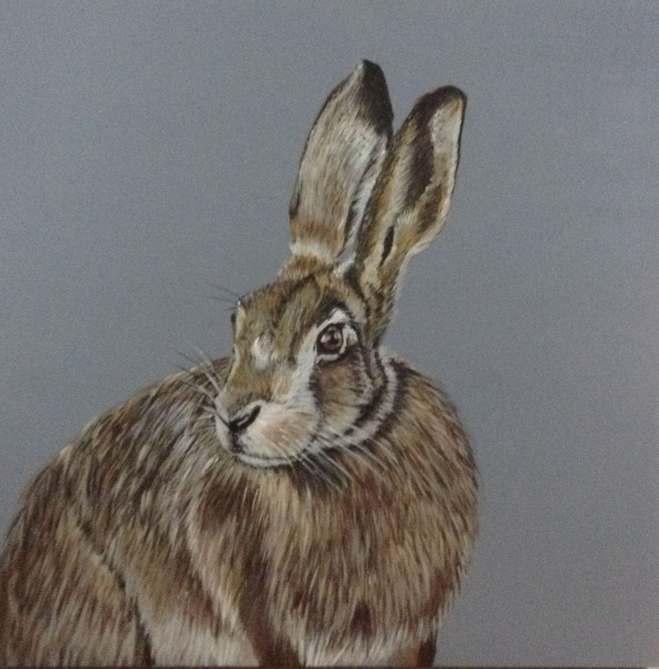 The Inquisitive Hare,  24 x 24 inch Acrylic on box Canvas - Image 0