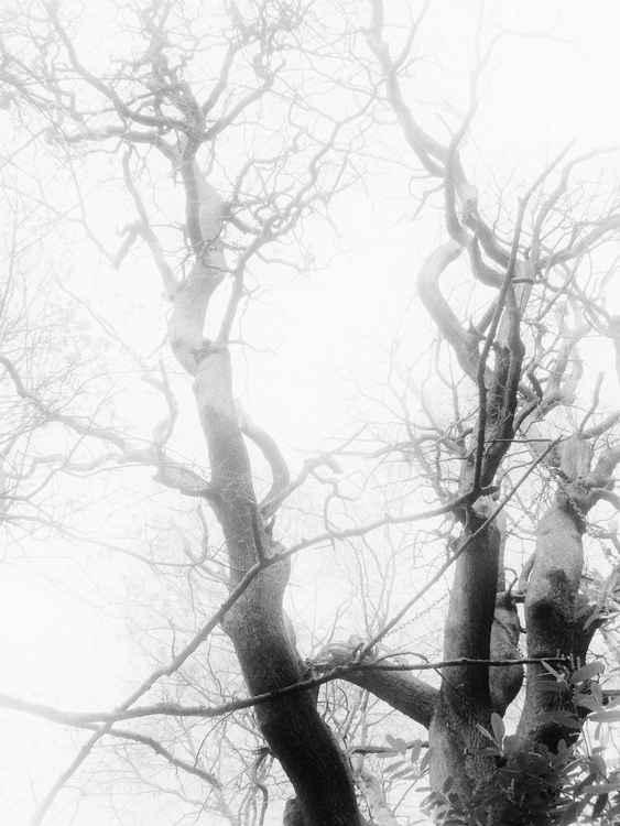Foggy day  -