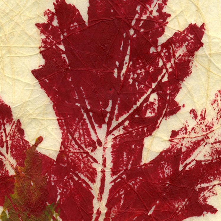 Botanical Double Maple Leaf Rubbing #1 - Image 0