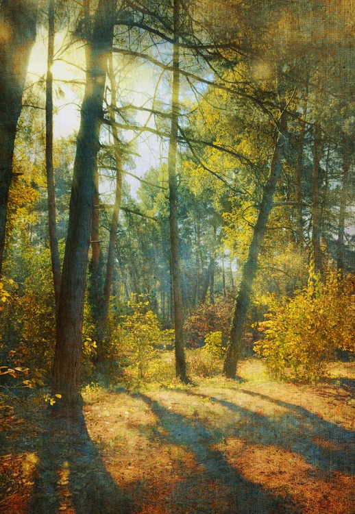 Forest - Image 0