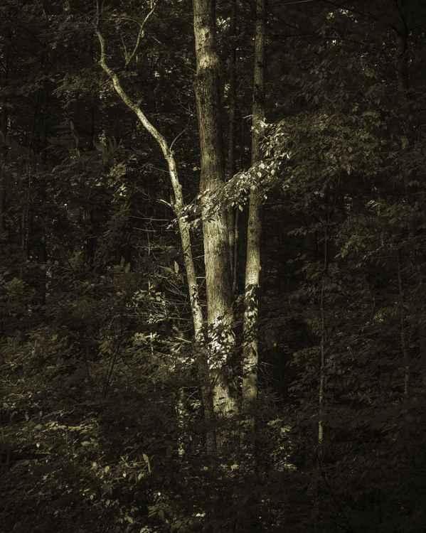 The Tree #1 -