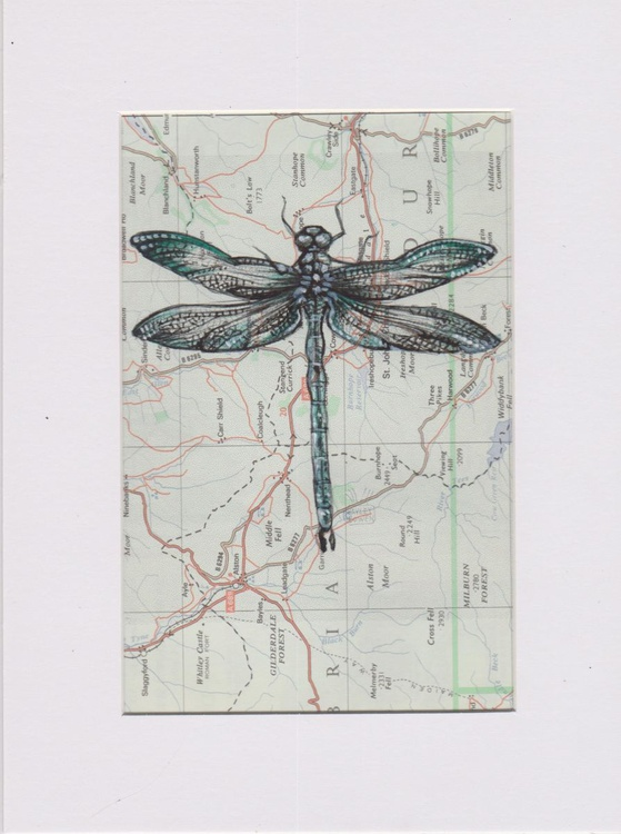 Dragonfly Migration 4 - Image 0