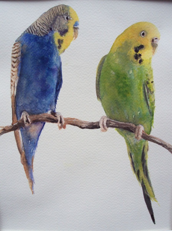 Two Budgies - Image 0