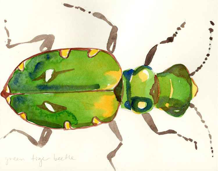 Green Tiger Beetle -