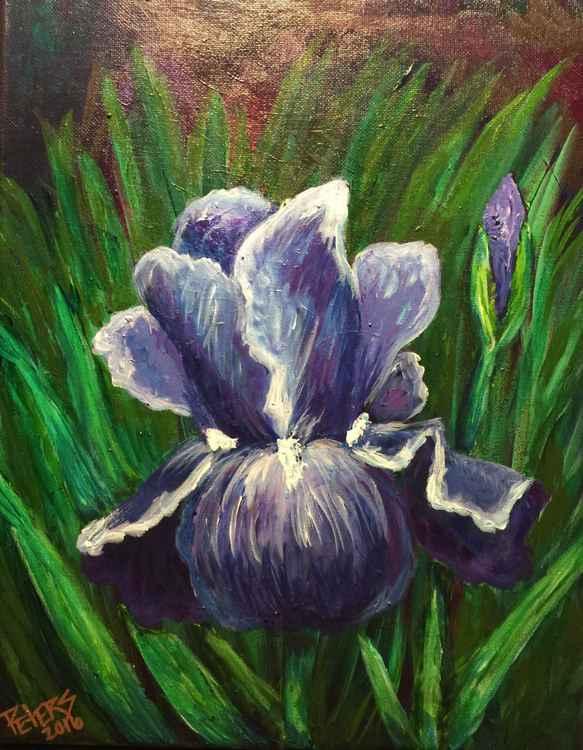 Lone Iris -