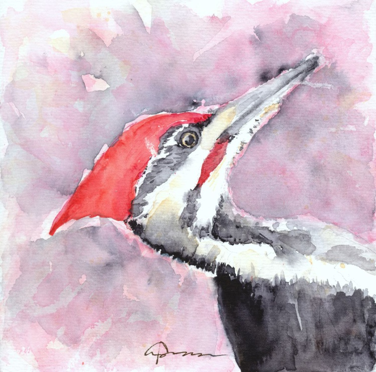 Pileated Woodpecker - Image 0