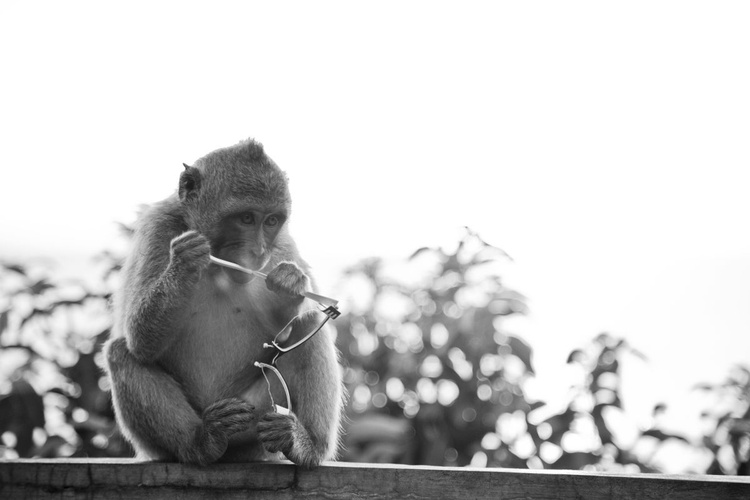 Monkey Village - What was THAT? - Image 0